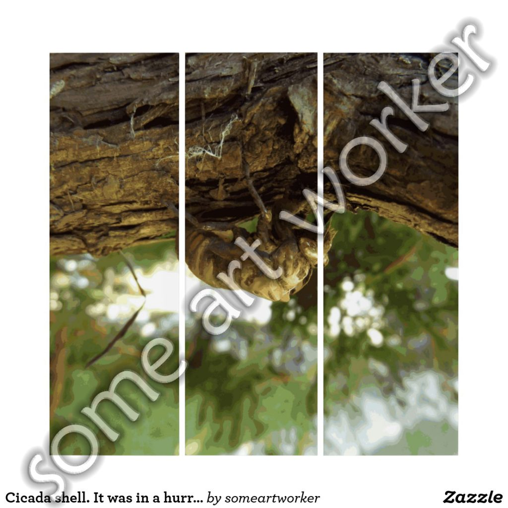Cicada shell. It was in a hurry. Triptych by someartworker on Zazzle