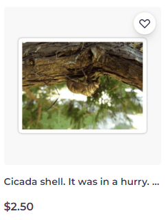 Cicada shell. It was in a hurry. sticker on Redbubble by someartworker